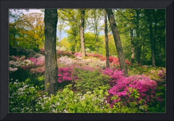 The Azalea Woodland