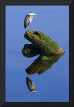 Great Blue Reflection