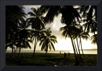 Haiti, evening light in coconut grove.