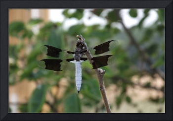 Dragonfly flying by