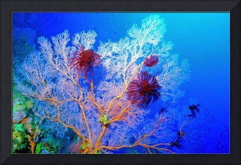 Pink Gorgonian With Crinoids