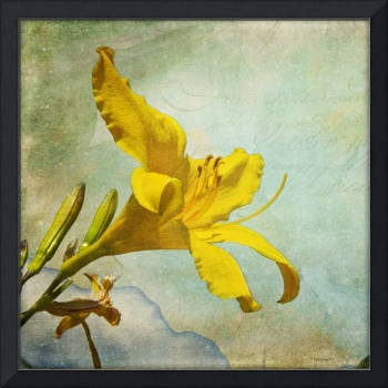 Yellow Asiatic Lilly IV
