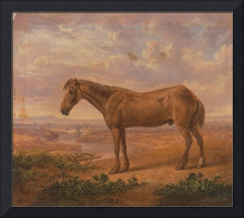 Charles Towne~Old Billy, a Draught Horse, Aged 62