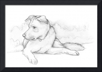 Lab Chow Mix Pencil Sketch