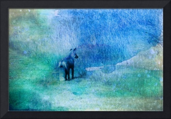 water-colour-fox-blue
