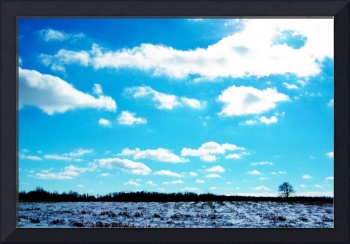 Sunlit Winter Field