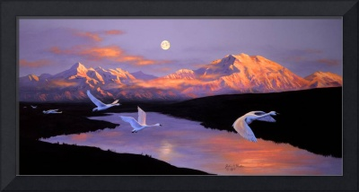 Wings Over Denali