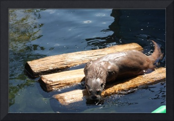 I OTTER do it