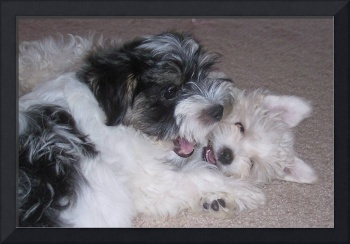 Laughing puppies