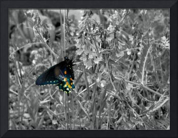Pop Of Color Monarch Butterfly