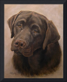 Chocolate Labrador Retriever Portrait