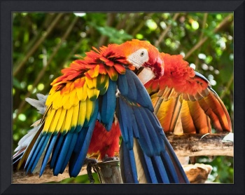 Red, Orange, Yellow and Blue Bird -  Scarlet Macaw