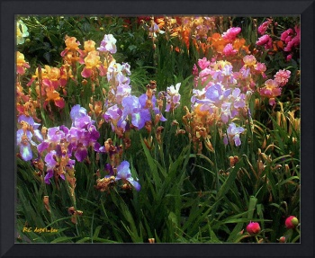 American Giverny