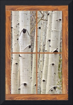 Winter Aspen Tree View Through a Barn Wood Window