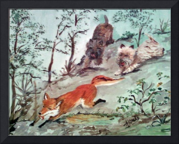 Cairn Terriers chasing a Fox