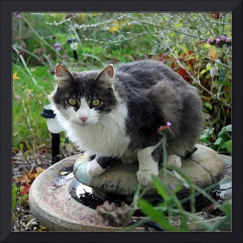 Cat on a Fountain