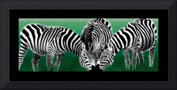 Green Meadow Zebras