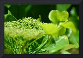 The view of the green flowers