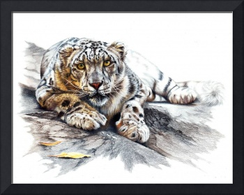 Snow Leopard, Ethereal Spirit