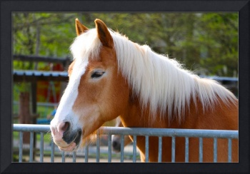 Brown Horse with Beautiful Mane