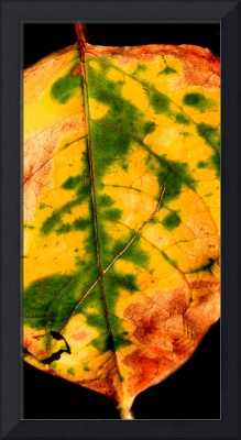 Colorful Macro Leaf Pattern
