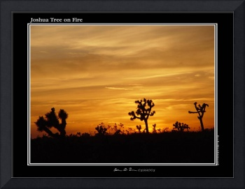 joshua tree on fire
