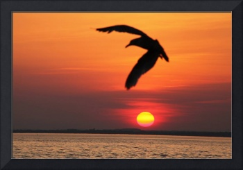 Fly by Sunset