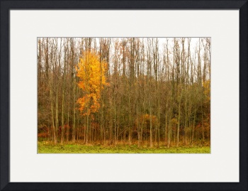 Late Autumn by D. Brent Walton