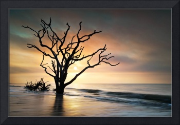 Bone Yard Sunrise - Botany Bay, Edisto Island