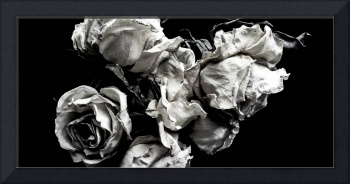 wilted roses on black background