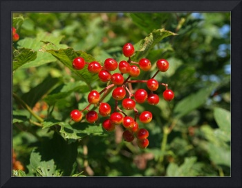red berries to brighten your room