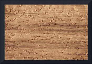 Birds-eye Pattern | Sugar Maple Wood | Natural Abs