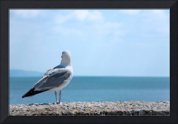 Seagull Looking Out to Sea - Natalie Kinnear Photo