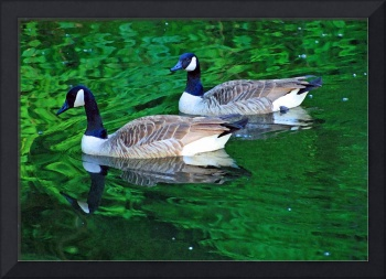 Canada Goose Couple on Green Water