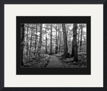 Sacred Grove - Trail by D. Brent Walton