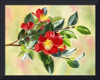 red camellia flowers on a branch