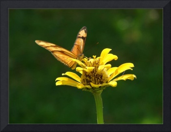 Yellow Butterfly #2