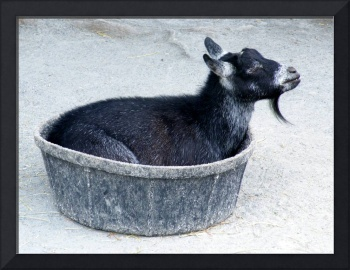 A Bowl of Goat
