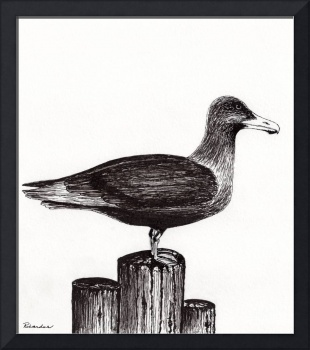 Seagull Portrait on Pier Piling E3L