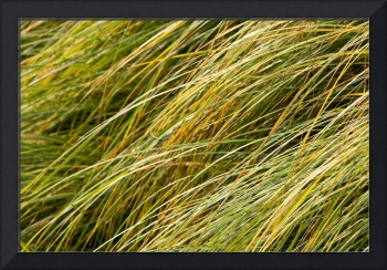 Flowing Green Grass Abstract