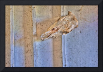 Cow Skull on Wall