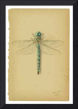 Dragonfly on page