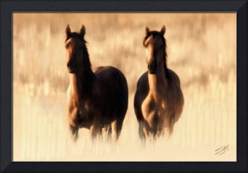 Wild Horses in High Grass