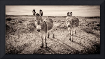 Chaco's Burros #2