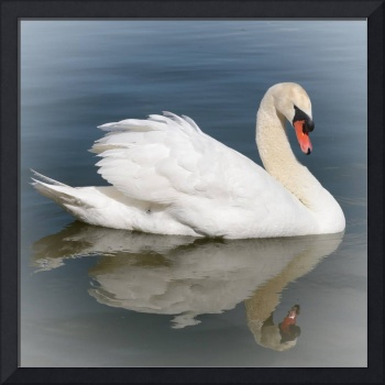 Reflection of Swan with Vignette