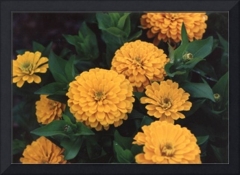 Vintage Photo of Flowers and Garden 1970s - 1980s