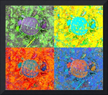 A Sequence of Toddler Turtles - Green & More
