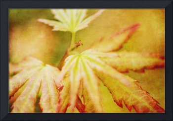 Japanese Maple Leaves Autumn Colors Texture Effect