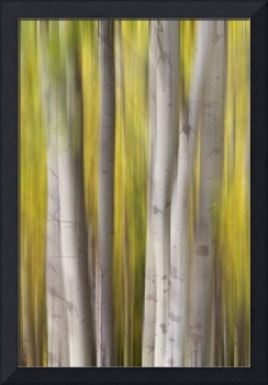 Aspen Trees in Autumn Color Portrait Dreaming View