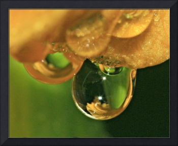 Day Lily Water Drop 5